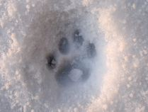 Kitty-toes in snow